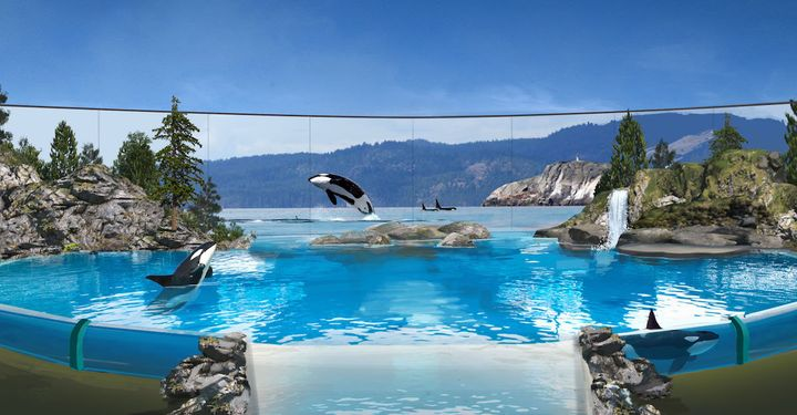 "A digital rendering of the upcoming Orca Encounter ""live presentation,"" which SeaWorld says will be focused on the animals' """