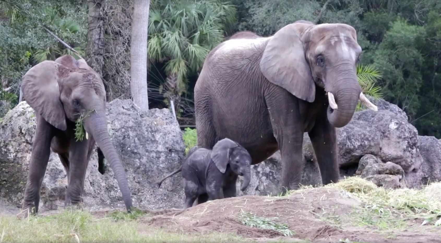 Baby Stella is seen exploring her new home alongside her mother and sister.