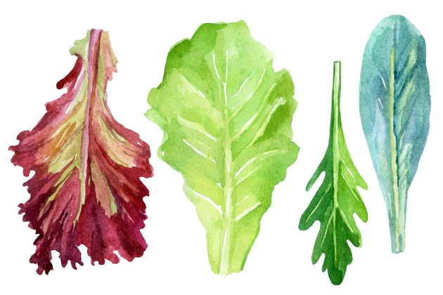 Here's What The Lettuce In Your Salad Actually Does For Your