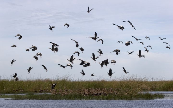 Birds take off in Esteros del Ibera, in the area owned by U.S. businesswoman Kris Tompkins.
