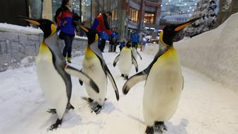 FILE PHOTO:  King Penguins walk in Ski Dubai at the Mall of the Emirates, Dubai, United Arab Emirates, February 1, 2012.    REUTERS/Mohamed al-Sayaghi/File Photo