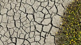 Mud cracks along a dried riverbed are pictured near San Ysidro, California March 31, 2016.  REUTERS/Mike Blake