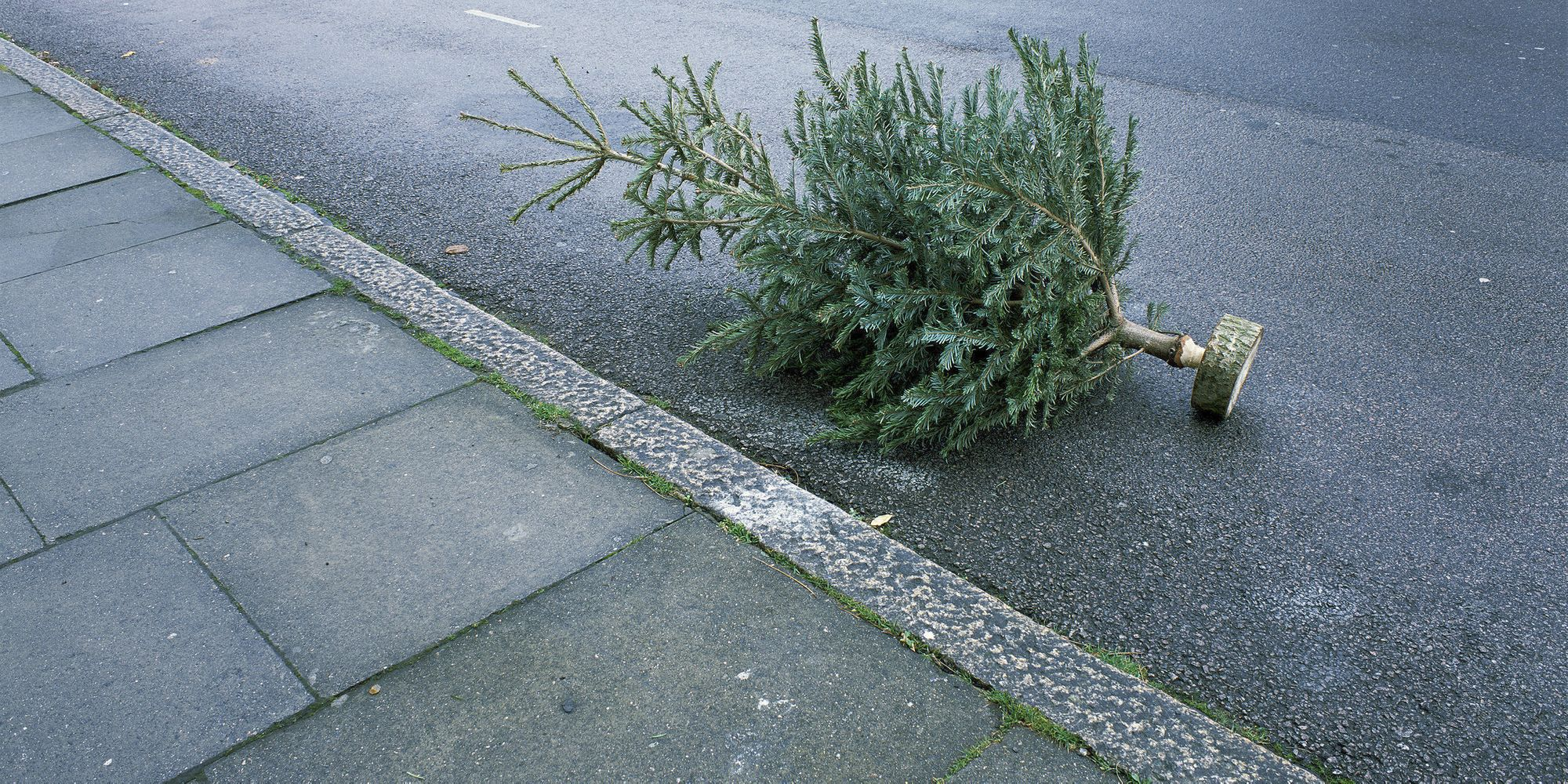 When Should You Take Your Christmas Tree And Decorations