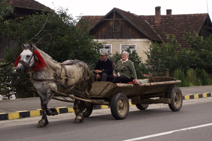 <p>Rush hour in a Romanian village.</p>