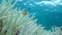 World's Coral Reefs Are Headed For Major