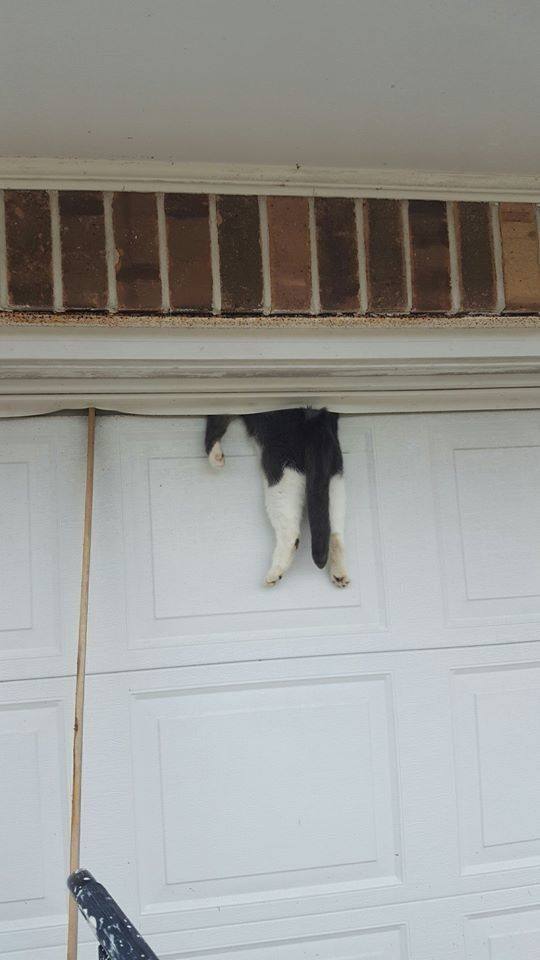 Bella the cat is either very lucky or very unlucky depending on how you look at it. & Community Teams Up To Save Cat Found Hanging From Garage Door ... Pezcame.Com