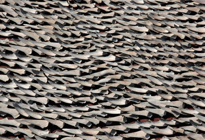 Thousands of shark fins are dried on the rooftop of a factory building in Hong Kong, January 2013. Air China has become