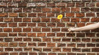 Female person holding yellow flower in front of brickwall.