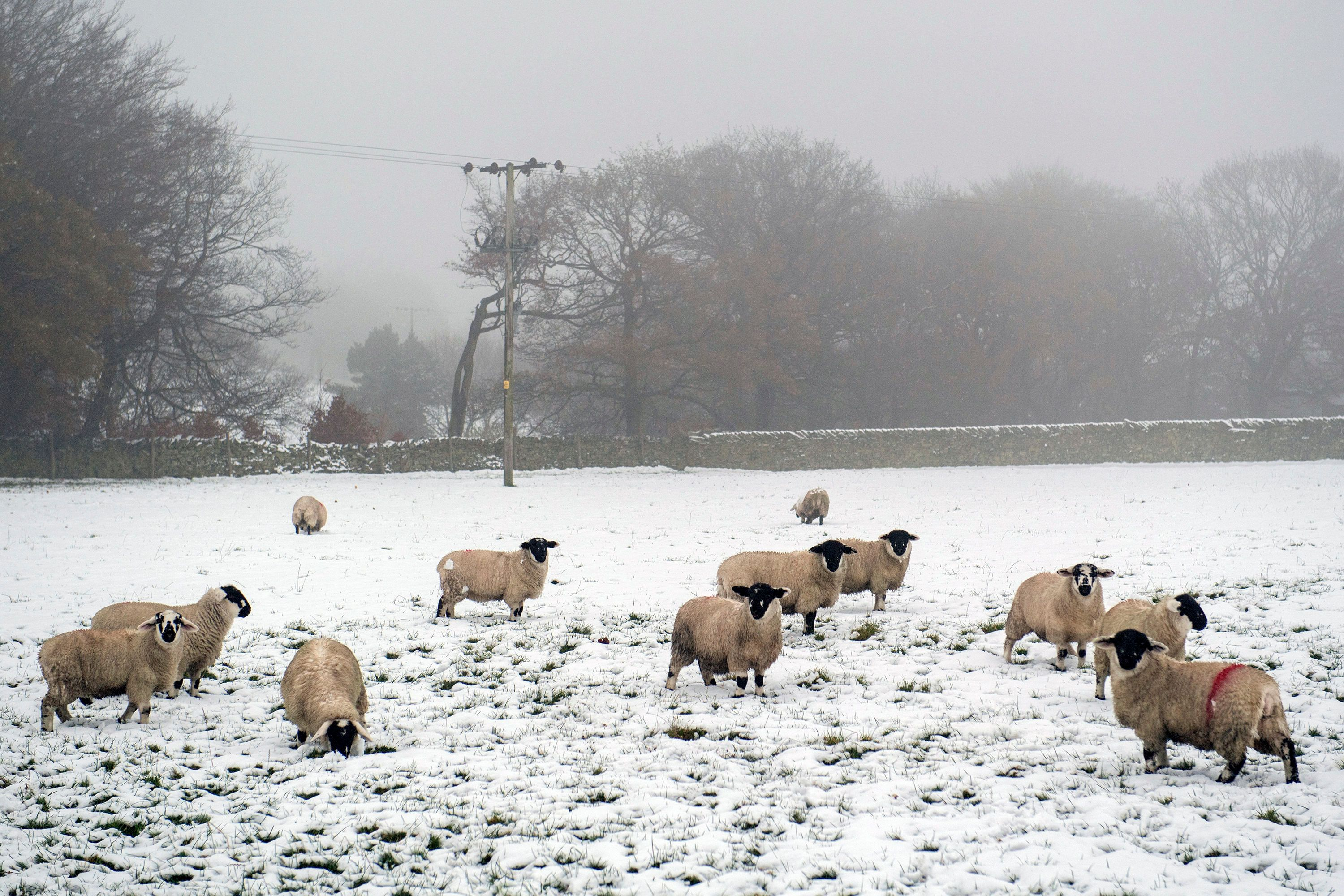 Arctic Blasts Could See Snowfall In Britain This Week, Met Office