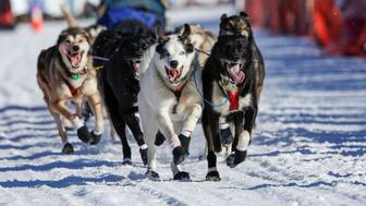 Robert Bundtzen's team leaves the start chute at the restart of the Iditarod Trail Sled Dog Race in Willow, Alaska March 6, 2016. Mushers and dog sled teams from around the world embark on the first leg of Alaska's gruelling Iditarod Trail Sled Dog Race, starting a nearly 1,000-mile (1,609 km) journey through the state's unforgiving wilderness. REUTERS/Nathaniel Wilder