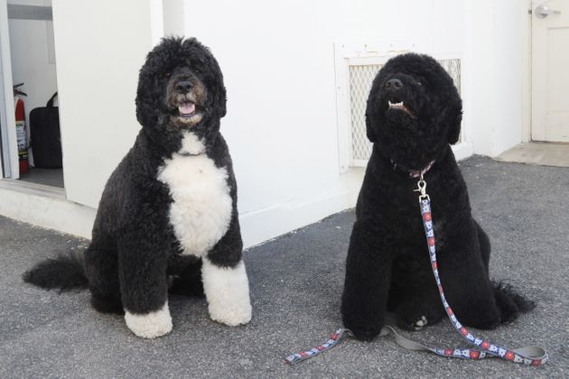First dogs Bo, left, and Sunny Obama are also moving out of the White House this