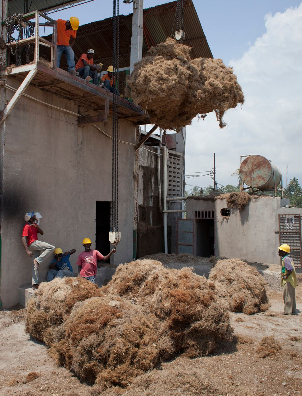 Workers move bales of Vetiver roots to be processed at the Agri-supply distillery on Haiti's southwest coast on March 27, 201