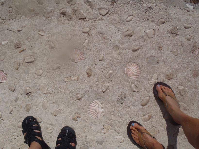 Shell Steps - Palmizana, Hvar