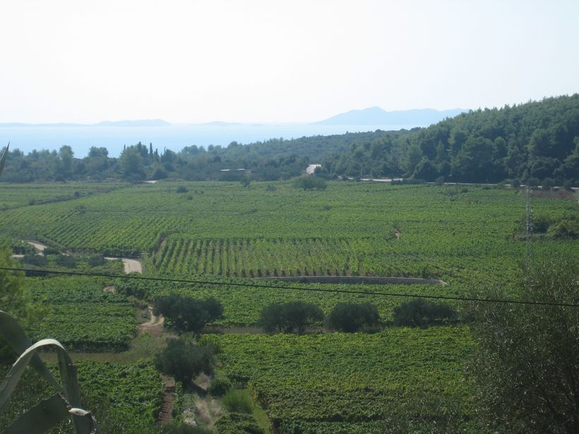 Vineyards, Korčula Island