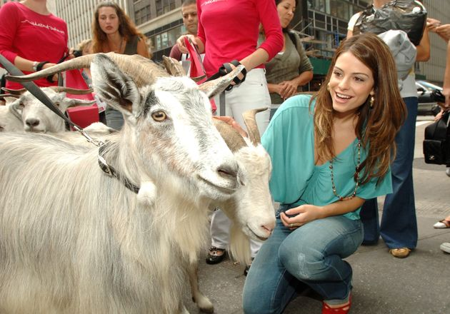 Maria Menounos posing with a cashmere goat, as one