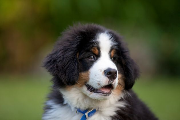 A new study suggests that puppies are more responsive to