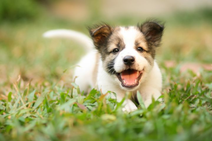 Not filling this article with photos of puppies wouldjust be plain wrong.