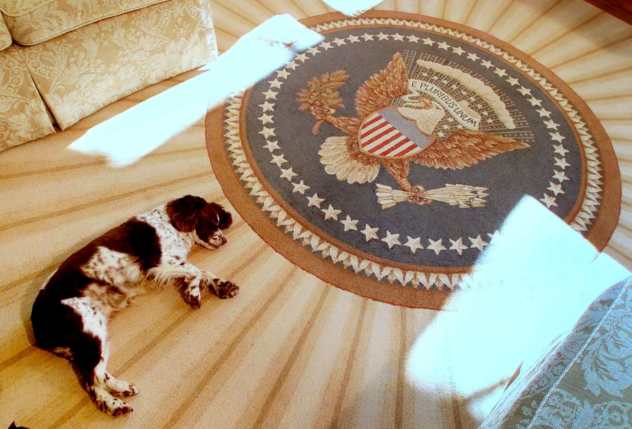 Spot, the dog of President George W. Bush and first lady Laura Bush, sleeps inside the Oval Office of the White House on Dec.