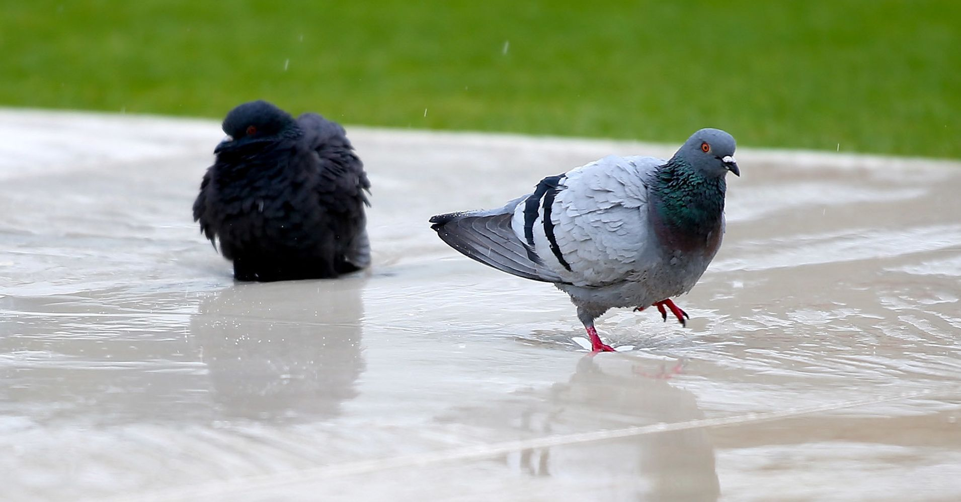 If you can read this you may be a pigeon huffpost biocorpaavc
