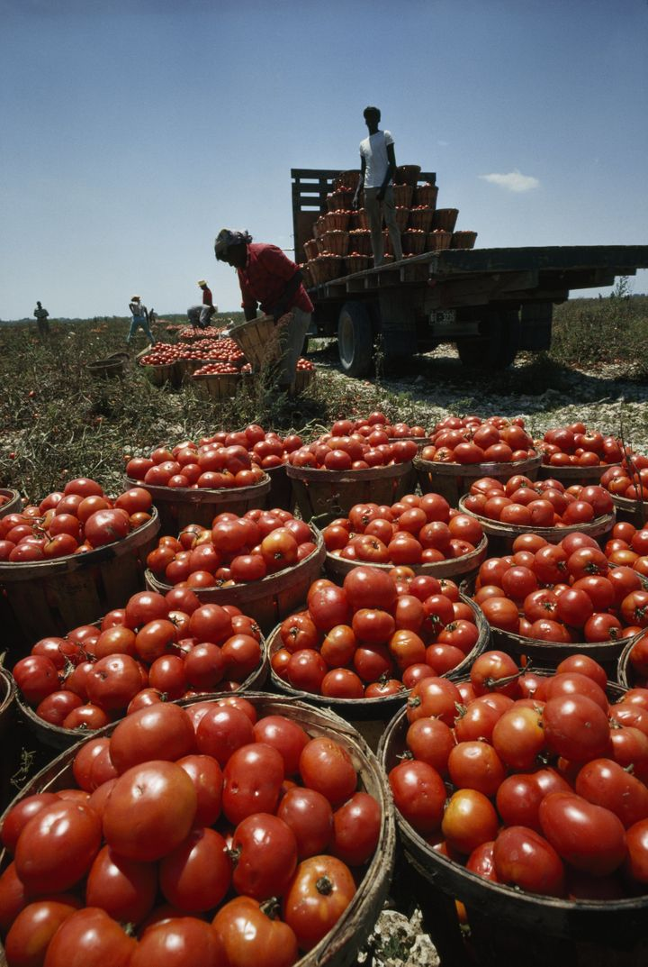 "<a href=""http://www.ciw-online.org/"">The Coalition of Immokalee Workers</a> is fighting to get tomato pickers better pay"