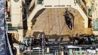 SI Blue Hornet heli finds the Japanese whaling fleet including the Nisshin Maru, Yushin Maru and the Yushin Maru No. 2. After being spotted with a whale on board the Nishhin they covered it in a blue tarp to not be filmed.