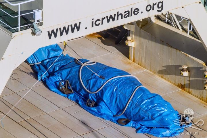 Sea Shepherd said the ship's crew quickly covered the whale after being spotted by a helicopter.