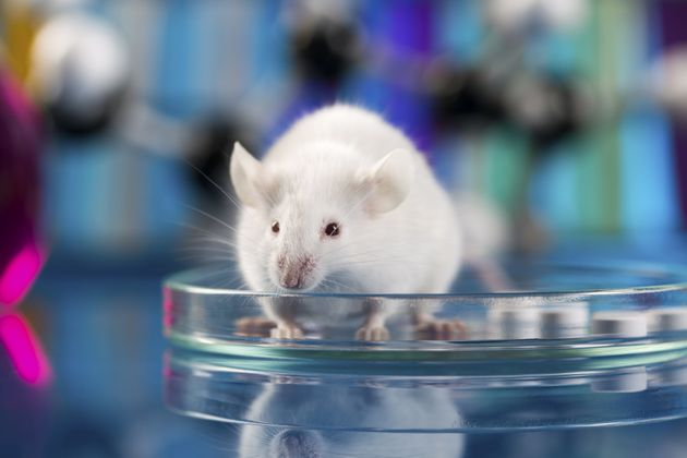 Scientists Have Restored Vision In Mice That Were Born