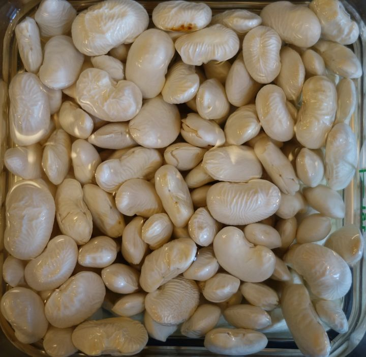 <p>Enormous beans from Spain: Judiones</p>