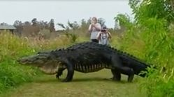 Massive Alligator Stuns Photographers, Proves Just How Wild Florida