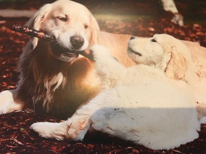 Finn was a loving father, always extra gentle with his favorite stick.