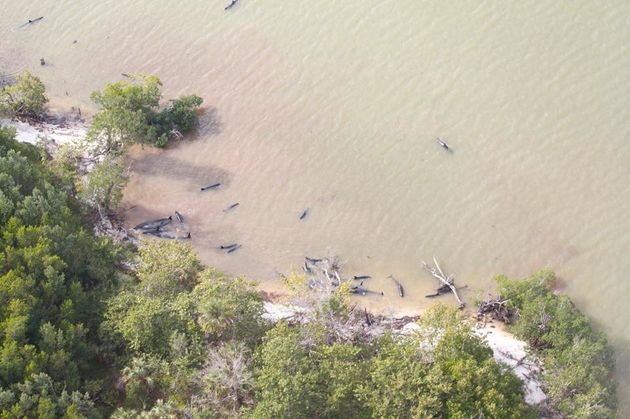 More than 80 dolphins die off Florida coast