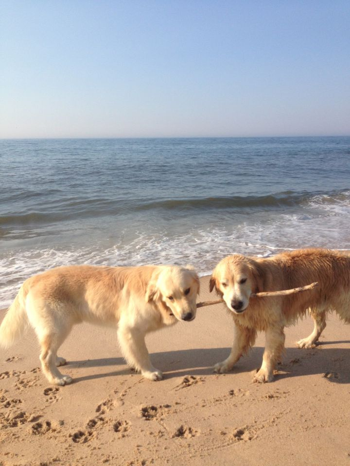 Post-swim activities typically included stick-wrestling with Finn (right) and his children, all of whom were adopted by famil