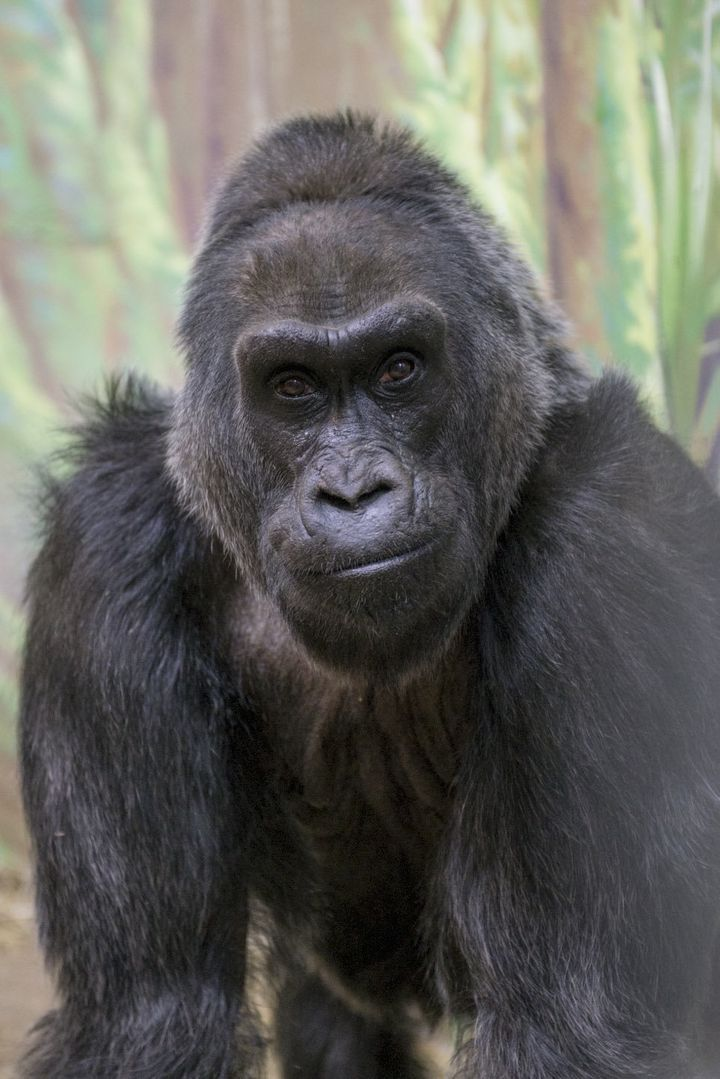 Colo in an undated photo from the Columbus Zoo.