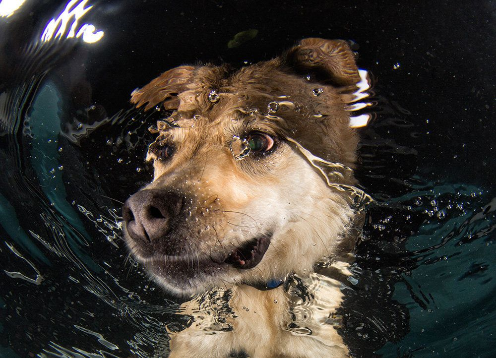 Mandy, a shepherd mix, getting a swimming lesson at spcaLA. Mandy has since been adopted.