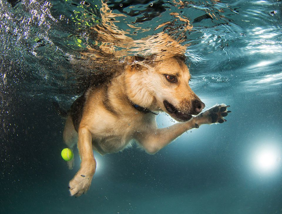 Mandy, a shepherd mix, at her swimming lesson. She has since been adopted.