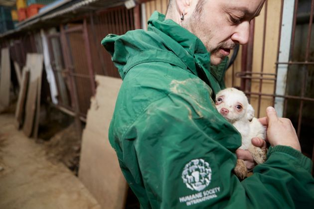 A Humane Society International employee holds one of the rescued