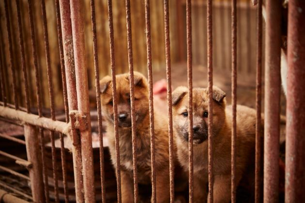 HSI has helped to rescue nearly 800 dogs from farms in South