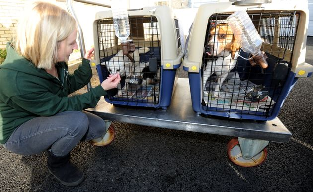 HSI's Wendy Higgins greets the dogs at