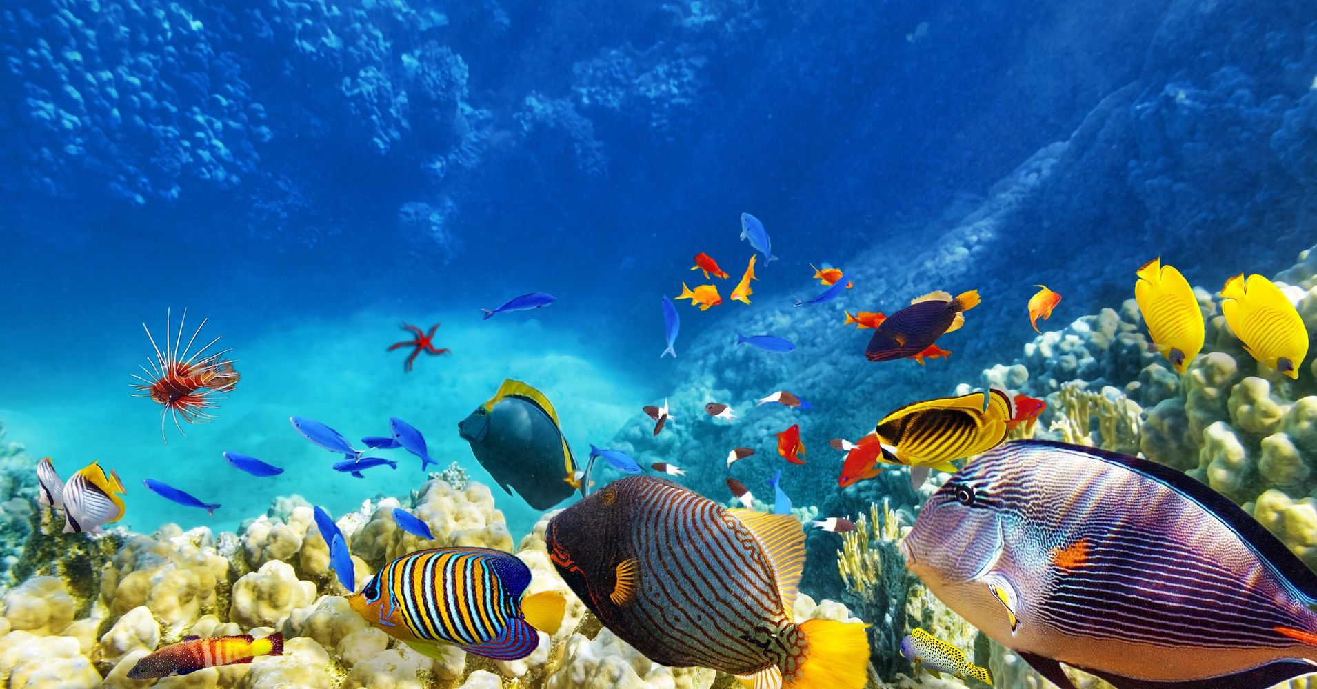 Save the Reefs: How to Preserve the Caribbean's Underwater ...