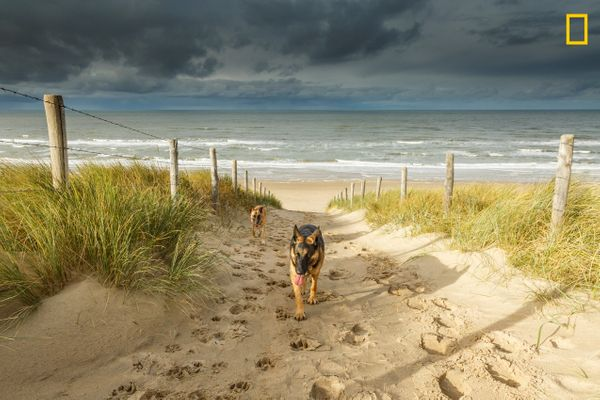 "Nat Geo hails this <a href=""http://www.nationalgeographic.com/travel/top-10/top-beaches-world/"" target=""_blank"">dog-friendly"