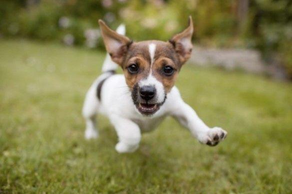 A puppy enjoying play