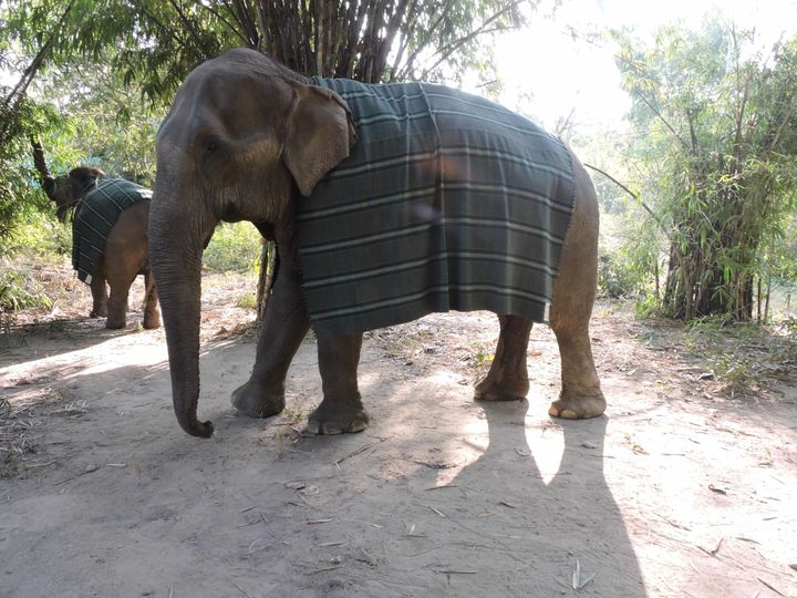 It takes weeks to make one of the elephant sweaters, so in the meantime, many of the elephants are wearing big blankets to de