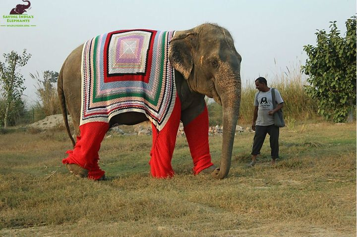 An elephant clad ina snappy sweater atWildlife SOS Elephant Conservation and Care Center.