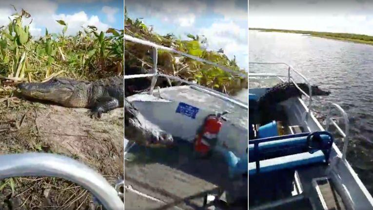 ワニが観光客のボートに襲いかかる 恐怖の一瞬をカメラがとらえた(動画)