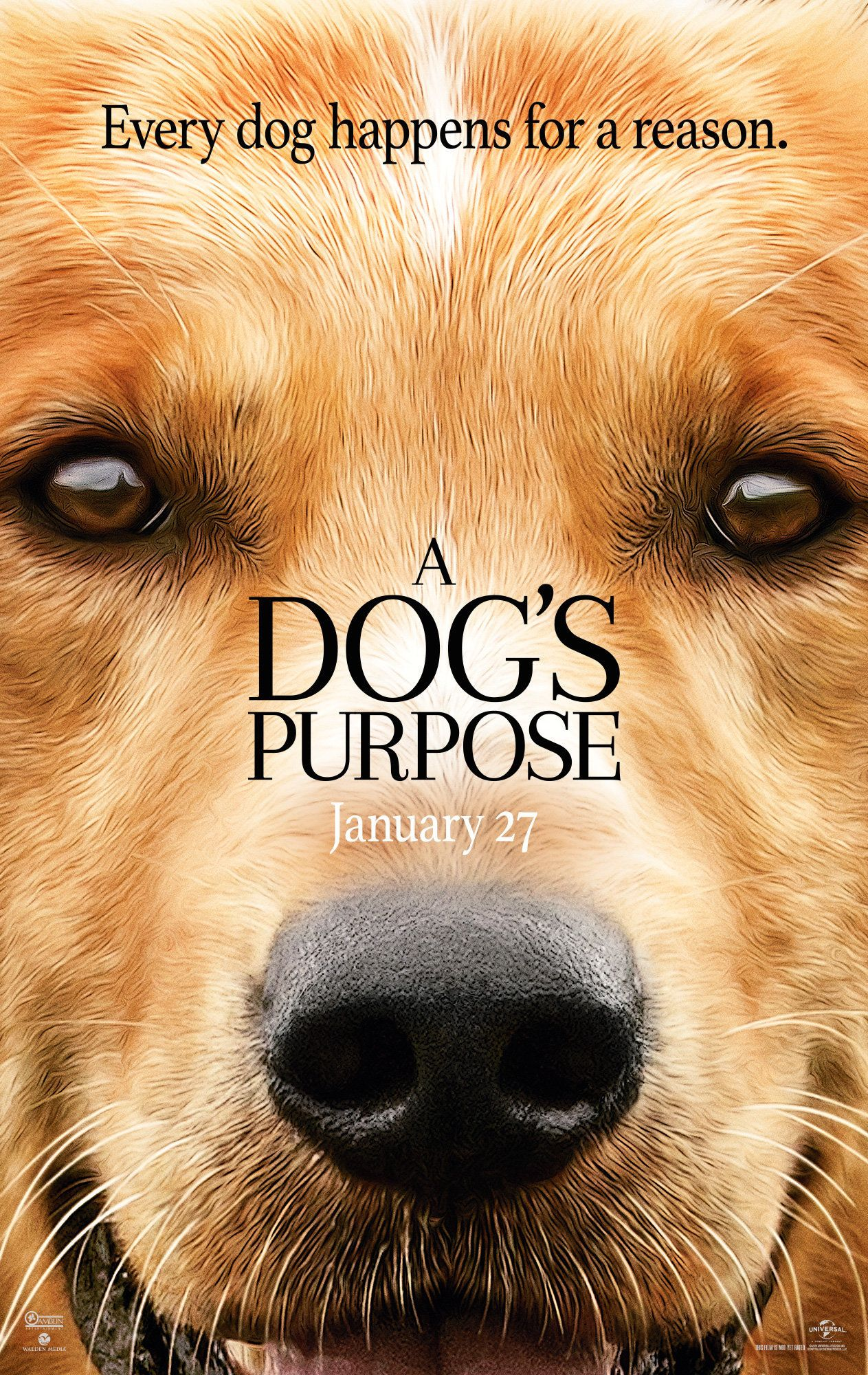 'A Dog's Purpose' Trainers Release Statement On Controversial