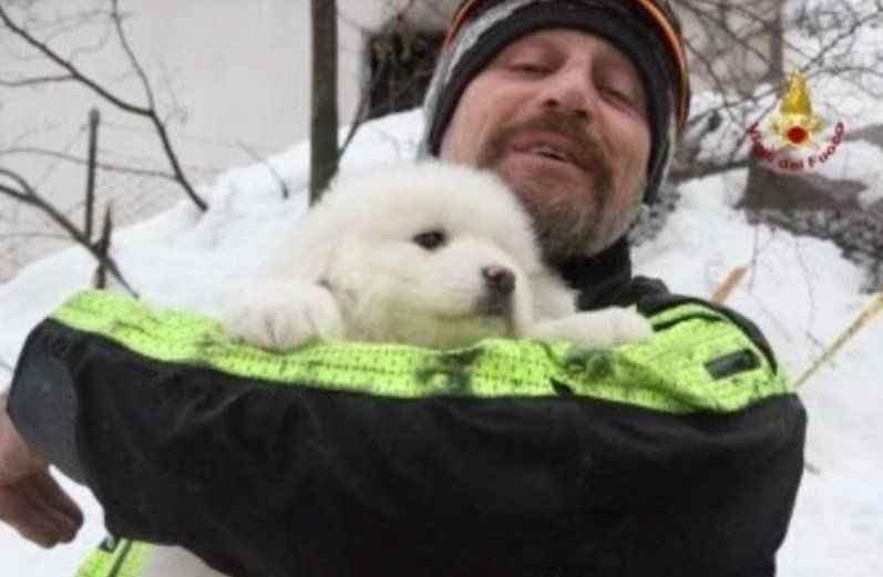 One of three puppies that were pulled from the ruins of an Italianhotel on Monday is seen in the arms of a rescuer.&nbs