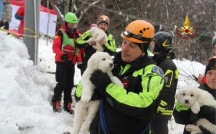The tiny puppies were heard barking from the hotel's boiler room, rescue officials said.