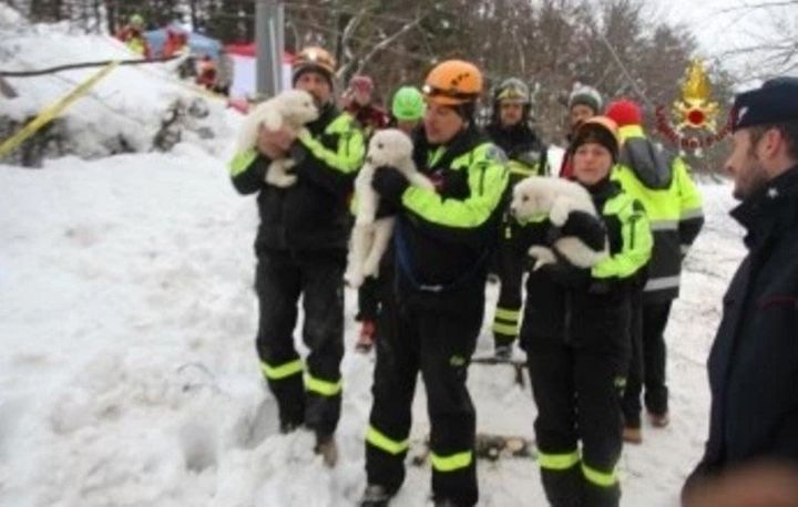 """The puppies appeared to be in """"very good health,"""" one rescuer was quoted as saying."""