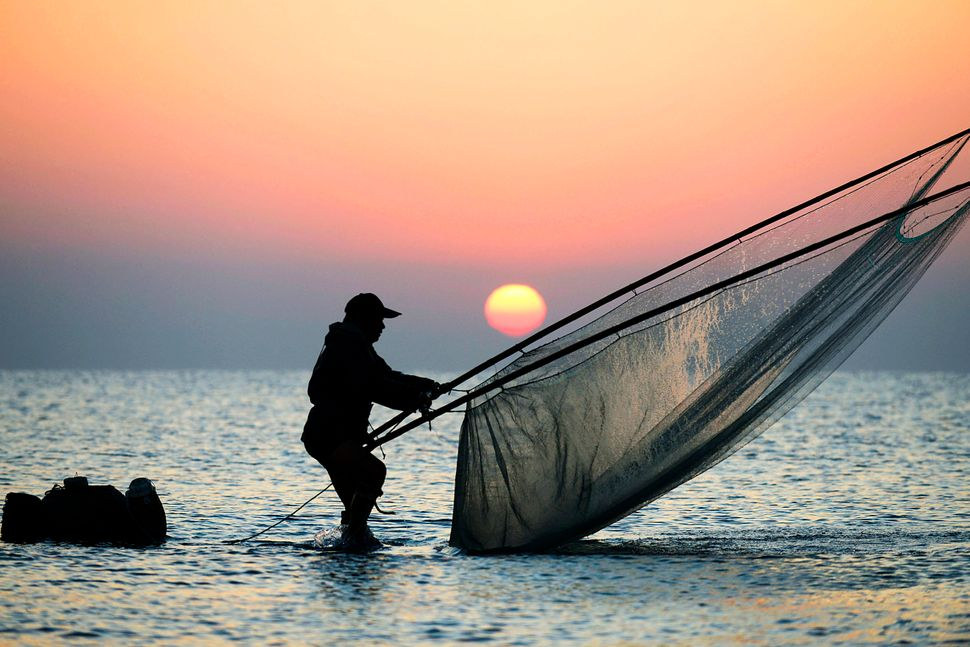 A fisherman on stilts nets shrimp in Rizhao. Oct. 13, 2015.