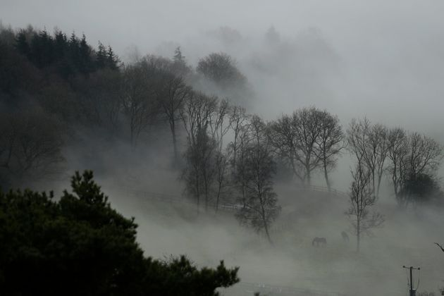 Horses graze in a paddock with fog enveloping the trees behind them, around Leith Hill in